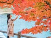 秋旅行のイメージ
