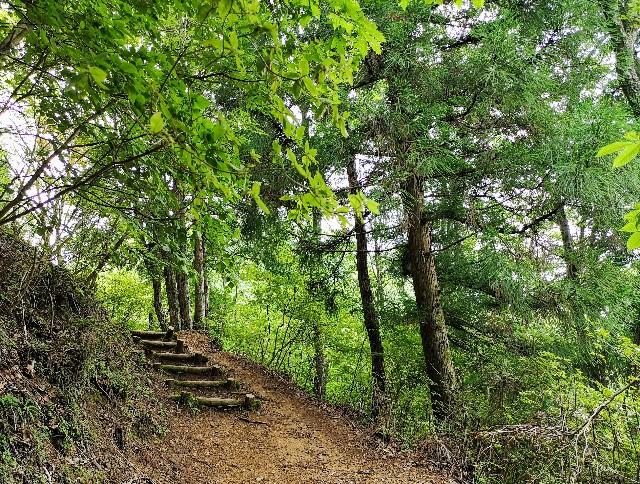 奈良県吉野郡・「洞川自然研究路」4