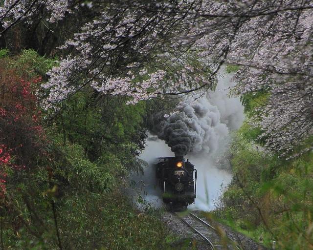 熊本県・「SL人吉」(写真提供:熊本県観光連盟HP)