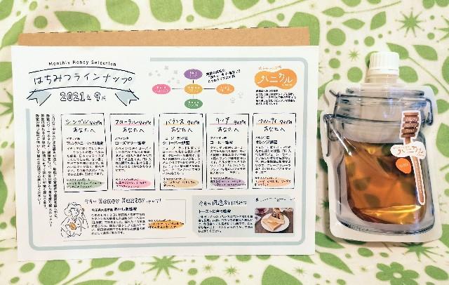 京都府京都市・蜂蜜専門店「ミールミィ」はちみつ定期便「ハニクル」タイプ別シート2