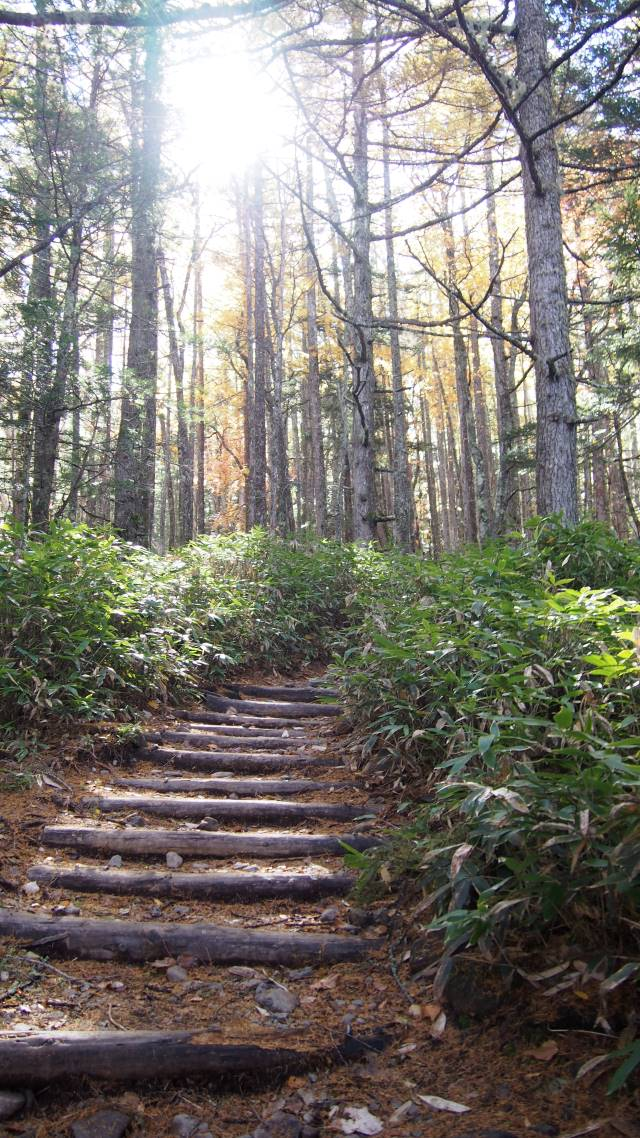 木立ちの登山道