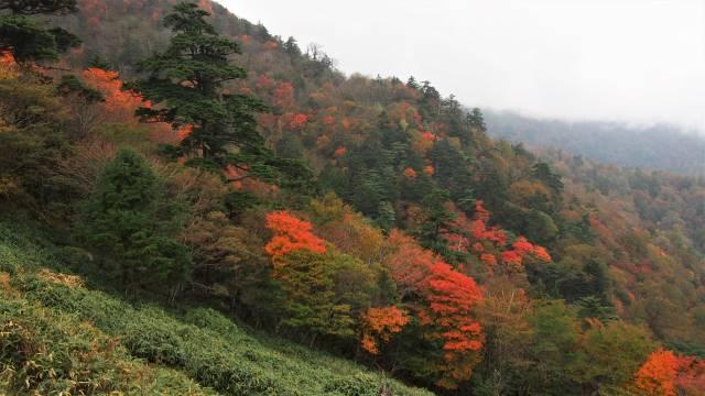 リフトから見る紅葉