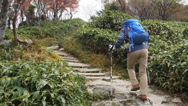 登山道歩き