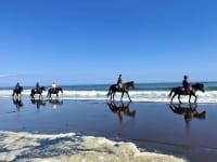 浜中町 乗馬